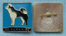 USSR / Badge / Soviet Union / RUSSIA Fauna. Eskimo Dog . Laika . - Animales
