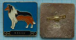 USSR / Badge / Soviet Union / RUSSIA Fauna. Dog. Collie. - Animales