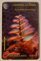 XMas Tree Worm - Iles Cayman