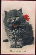 Chat Noir- Black Cat -katze- Kleine Poes Met Strik - Chats