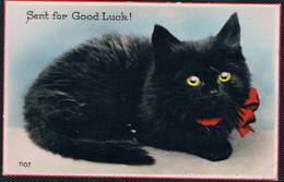 Chat Noir- Black Cat -katze- Zwarte Poes Met Rode Strik - Chats