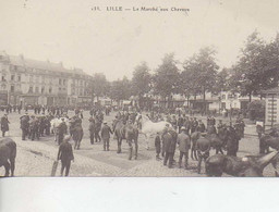 Marche Chevaux - Lille