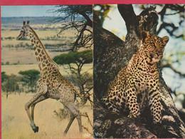 ANIMAUX FAUNE AFRICAINE GIRAFE ET LEOPARD - Tiger