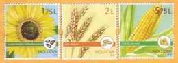 2019 Moldova Moldavie  Cereal Crops. Field Crops. Cereals. Sunflower. Corn. Set  Mint - Moldawien (Moldau)