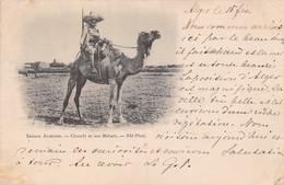 Sahara Algérien Chambi Et Son Mehari 1898 - Scenes
