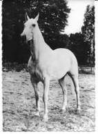 Cheval - Paarden