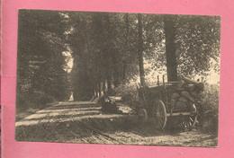 C.P. Grande Espinette  =  Avenue  BRASSINE - Rhode-St-Genèse - St-Genesius-Rode