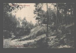 Genval - Sapinières à Bourgeois - Rixensart