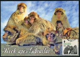 GIBRALTAR (2020). Carte Maximum Card - Barbary Macaque (Macaca Sylvanus), Rock Ape, Mono, Macaque Barbarie, Berberaffe - Gibraltar
