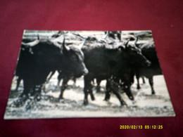 EN CAMARGUE  MANADE DES TAUREAUX  LE 4 08 1986 - Unclassified