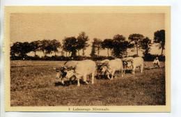 58 Labourage Nivernais 3- Attelage 6 Boeufs Paysan Champ Agriculture 1930     /D12-2018 - Unclassified
