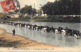 A/23            51      Chalons Sur Marne     Le Brossage Des Chevaux - Châlons-sur-Marne