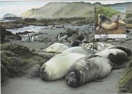 Australian Antarctic Territory 2010 Macquarie Island,Southern Elephant Seal,maximum Card - Tarjetas – Máxima
