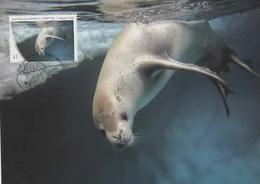 Australian Antarctic Territory 2013 Crabeater Seal,maximum Card - Tarjetas – Máxima