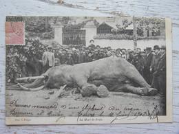 CPA (37) Indre Et Loire - TOURS - Cirque Barnum Et Bailey - La Mort De Fritz( Un éléphant) En 1910 - Tours