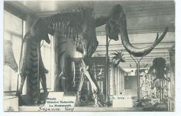 Bruxelles - Musée D'Histoire Naturelle, Le Mammouth - Expositions Universelles
