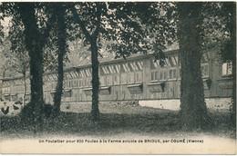 COUHE - Poulailler Pour 600 Poules, Ferme Avicole De Brioux - Couhe
