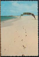 °°° 25111 - NETHERLANDS ANTILLES - ARUBA'S FAMOUS DIVI DIVI TREE - 1968 With Stamps °°° - Aruba