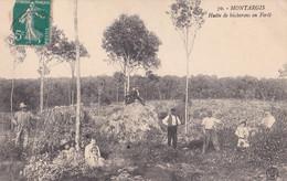 Montargis : Montargis : Hutte De Bûcherons En Forêt - Montargis