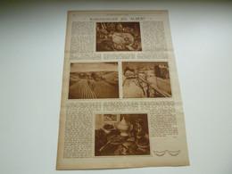 """Origineel Knipsel ( 3561 ) Uit Tijdschrift """" Ons Land """" 1929 :   Kunstschilder Jos. Albert  Brussel  Ukkel  Uccle - Unclassified"""