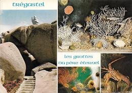 POISSONS ET CRUSTACÉS - PLUSIEURS COQUILLAGES ET LANGOUSTES- 4 PETITES VUES - CPM - ÉCRITE - - Poissons Et Crustacés