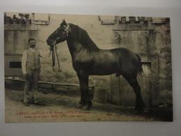 AHUILLE MAYENNE LAPIN APPARTENANT A M.BARRAIS  ETALON NE EN 1907 TAILLE 1m 63 ROBE NOIRE - Otros Municipios