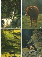 """Lot 14 CPM """" Prestige """" Autour De La Vache """"en Régions De France Divers Photographes - Andere Fotografen"""