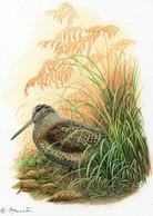A.Buzin : Kaart Van De Houtsnip 06-04-2009 - 1985-.. Oiseaux (Buzin)