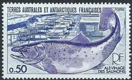 Terres Australes Et Antarctiques Françaises (TAAF) - Alevinage Du Saumon - Unused Stamps