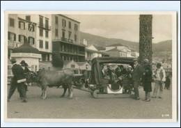 XX11039/ Madeira Bulluc-Car  Ochsenschliiten Portugal Foto AK Ca.1930 - Non Classificati