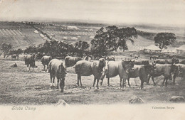 GB Postcard Scotland Hawick Stobs Camp 1904 - Roxburghshire