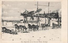 USA Aux Approches De L' Ocean Arctique Chien Chiens De Traineau Alaska - Autres