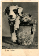 Chat Et Chien -cat And Dog  -poes  Hond In Bloempot -katze Hund - Chats