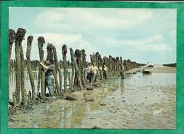 Saint-Georges-d'Oléron (île D'Oléron 17) Les Boucholeurs à Boyardville 2scans Poteaux Pour Moules Carte Animée - Ile D'Oléron