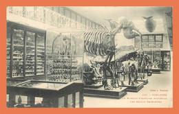 A715 / 221 31 - TOULOUSE Muséum D'Histoire Naturelle Squelettes - Toulouse
