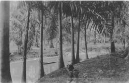 SURINAM  -  GOUVERNEMENTSPALMENTUIN TE PARAMARIBO - Surinam