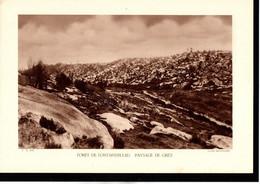 (77) SEINE ET MARNE - Fiche - Année 1935 - Forêt De Fontainebleau, Paysage De Grès, Cliché Deffontaines - Géographie