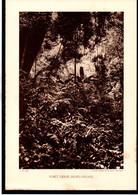 VIETNAM - Fiche - Année 1935 - Forêt Dense - Nord Annam - Cliché Agence Economique D'Indochine - Géographie