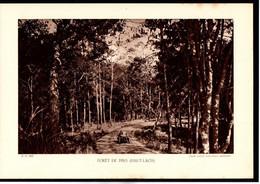 LAOS - Fiche - Année 1935 - Forêt De Pins Haut-Laos - Cliché Agence Economique D'Indochine - Géographie