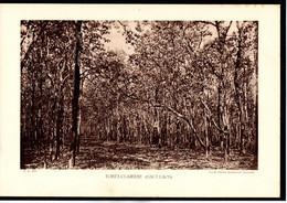 LAOS - Fiche - Année 1935 - Forêt Clairière Haut-Laos - Cliché Services Géologiques D'Indochine - Géographie