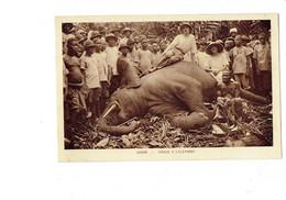Cpa - GABON - Chasse à L'éléphant - Animation Chasseur - Gabon