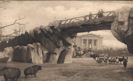 Anvers - Jardin Zoologique - Pont Et Grand Parc Des Ruminants - Antwerpen