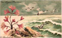 Lot 6 Cartes Postales - Série Complète LES ALGUES MARINES (toutes Cartes Scannées) - Altri