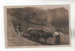 +4600, FOTO-AK, WK I, Ca. 1915,  Rumänien, Karpaten, - Rumania