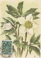 Fleurs -   Hellebore - Maximum Cards
