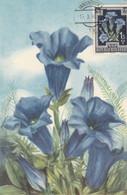 Fleurs -   Genziana - Maximum Cards
