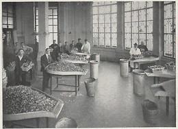 E2208 Il Tribunale Dei Funghi - 1934 Stampa Epoca - Vintage Print - Stampe & Incisioni