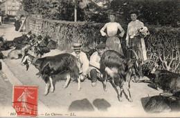 Lourdes CPA  Les Chèvres - Lourdes