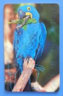 Germany Parrot Bird Hyacinth Macaw Oiseaux Pappagallo Vogel Birds Parrots Telefonkarte - Pappagalli