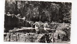 69 - LYON - Parc De La Tête D'Or - Les Pélicans (P29) - Uccelli